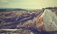 Ecologiștii speră ca mediul să fie un obiectiv prioritar pentru viitoarea guvernare (Sursa foto: pixabay)