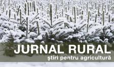 Prima de înființare a plantațiilor forestiere acoperă și costurile de elaborare a proiectului tehnic de împădurire