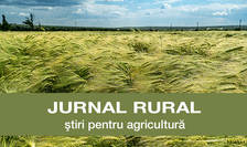 Jurnal rural - lan de grau