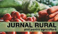 Producătorii de tomate vor beneficia și anul acesta de ajutoare de minimis
