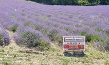 Lavanda în pericol - sa salvam ceea ce este natural - este un afis amplasat în plantatia de lavanda a familiei Aubanel, producatoare de uleiuri esentiale de 3 generatii, Drôme, sud-estul Frantei.