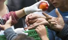 Alimente distribuite imigranţilor ajunşi în Germania (Foto: Reuters/Hannibal Hanschke)