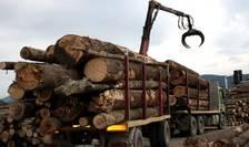 Exportul de lemn, oprit temporar