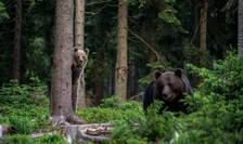 Sursa foto: WWF/Thomas Hulik