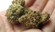 Legalizarea canabisului medicinal. Medic psihiatru: Diferența dintre drog și medicament e dată de dozaj și uz