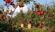 O bancă importantă din România a început să facă, periodic, analize de piață pentru produse agricole, precum cartofi sau mere.