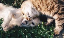 Veterinarii susțin vaccinarea animalelor de companie (Sursa foto: pixabay)