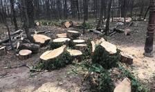 Copaci tăiați în parcul Herăstrău (Sursa foto: Facebook/Eco-Civica)