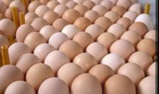 Producătorii de ouă din România riscă falimentul din cauza importurilor din Polonia