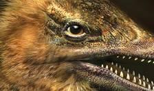 Cercetătorii au realizat un embrion de găină cu bot de dinozaur.