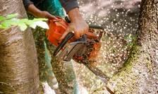 Stop tăierilor ilegale! (Sursa foto: WWF România)