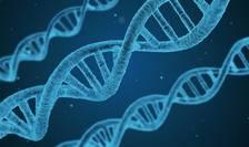 Un cercetător chinez anunţă primii bebeluşi modificaţi genetic (Sursa foto: pixabay)