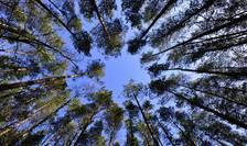 Program de plantări virtuale de copaci, pus la punct de ecologiști (Sursa foto: pixabay-ilustrație)