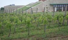 În ciuda sumelor mari investite, vinurile românești se văd prea puțin în plan mondial