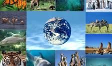 Terra: o specie din opt este condamnată (de om) să dispară.