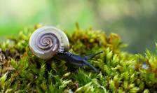 Ultima lista rosie mondiala a biodiversitatii arata ca din 135.000 de specii studiate, 37 de mii sunt pe cale de disparitie.