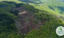 Tăieri masive în Parcul Naţional Cheile Nerei Beuşniţa (Sursa foto: site Agent Green)