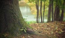 Ministerul Mediului a lansat o campanie amplă de împăduriri (Sursa foto: pixabay)