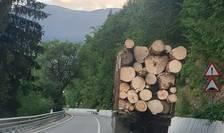 Noi critici ale ecologiștilor la adresa SUMAL 2.0 (Foto: Radu Vlad/WWF România)
