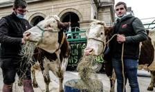 Zeci de agricultori au protestat în fata Primăriei din Lyon față de decizia primarului ecologist de a impune meniuri fara carne în cantinele scolare.