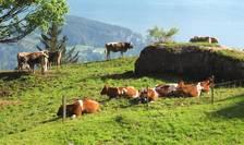 Creșterea animalelor, domeniul care poate aduce mulți bani, se arată încă rămasă în urmă