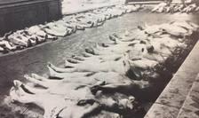 Cadavre de evrei la Morgă în ianuarie 1941