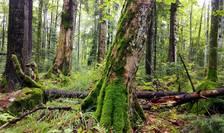 Vor fi mai protejate pădurile seculare ale României? (Sursa foto: Agent Green)