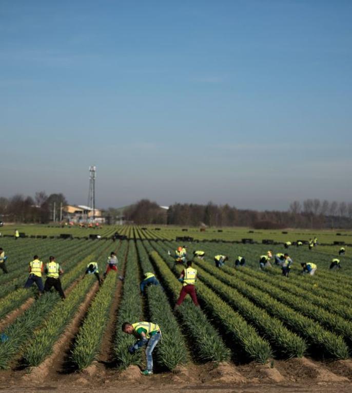 Lucrători agricoli în UK
