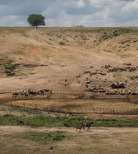 Fermă afectată de secetă, Dobrogea, 2020 (Foto: Ioana Moldovan/Greenpeace România)