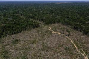 Despăduriri în pădurea amazoniană.