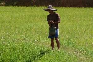 Lucrator al unei plantatii de orez, Tana Toraja, Indonezia.