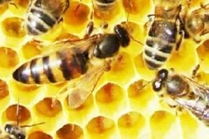 Albine si miere.