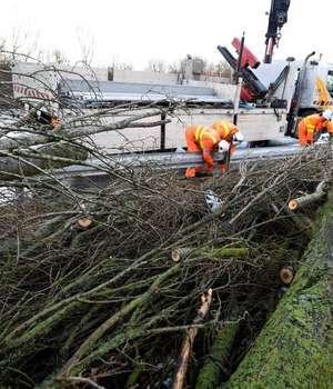 Caderi de arbori s-au inregistrat la Avranches, Manche din cauza vantului puternic
