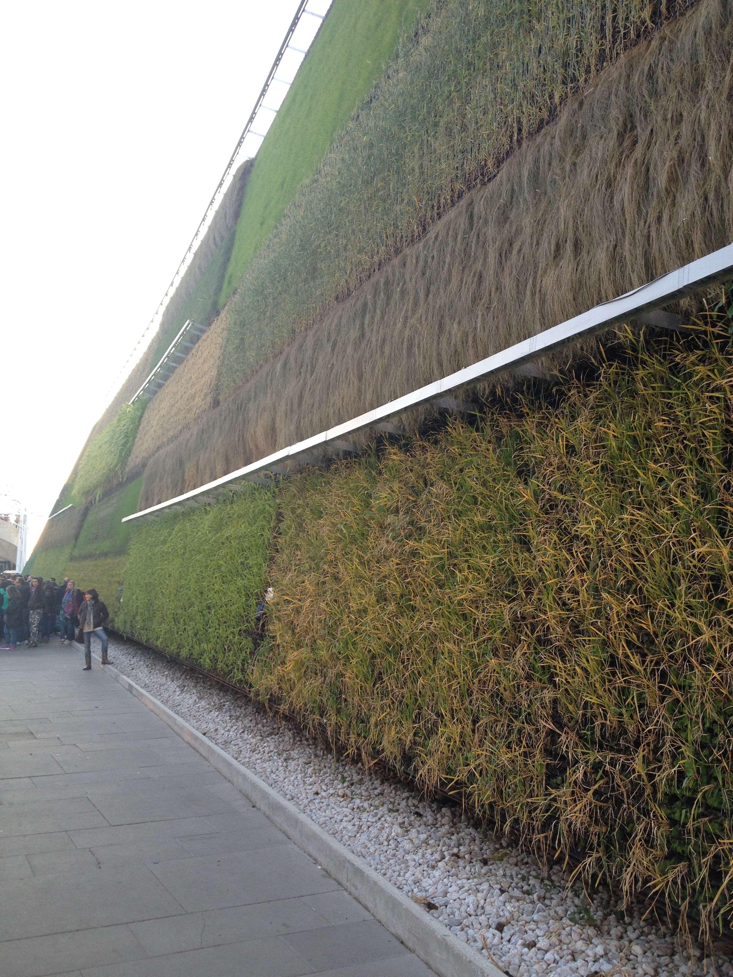 """Un urias perete """"vegetalizat"""" acoperà pavilionul Israelului"""