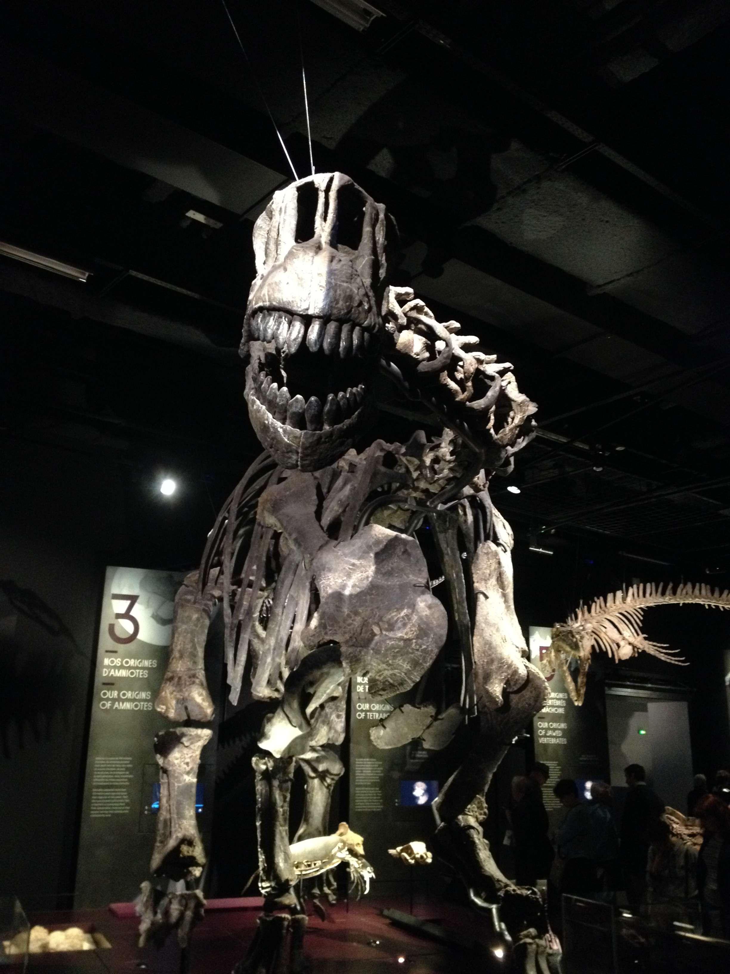 Scheleti de dinozauri în primele sàli