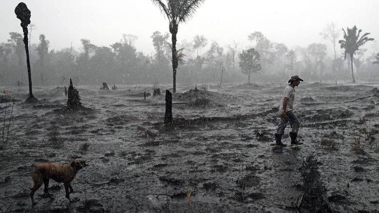 Pàdure arsà în Amazonia, 26 august 2019, lângà Porto Velho, Brazilia.