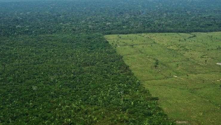 De la venirea la putere a lui Jair Bolsonaro despăduririle din Amazonia au crescut cu 67% (potrivit agenţiei oficiale braziliene INPE)