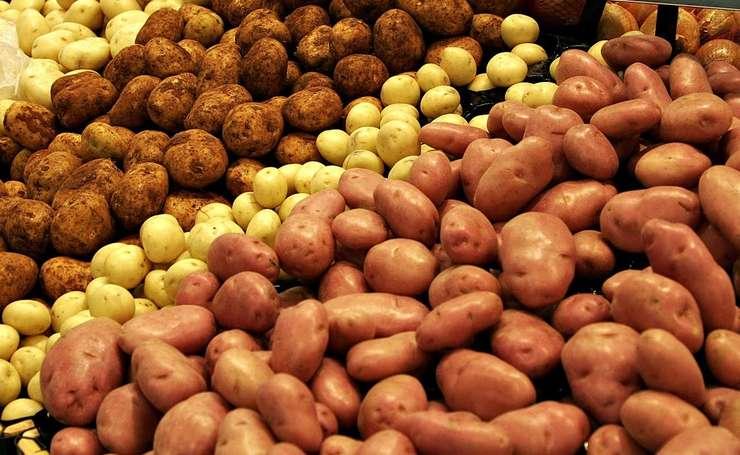 Mihail Mucsi a ajuns acum să cultive 305 hectare, din care o treime cu cartofi