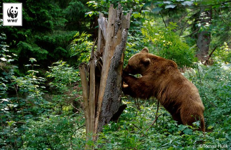 Foto: Tomas Hulik via Facebook WWF-România