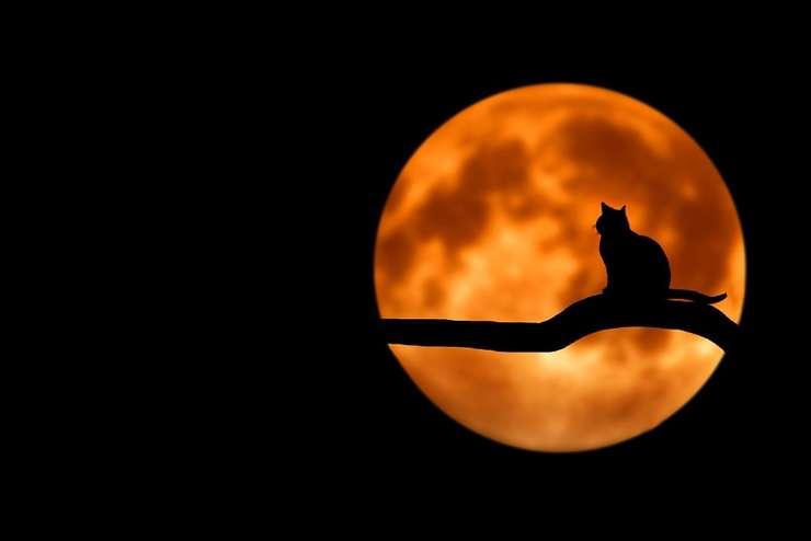 Luna va deveni sângerie în timpul eclipsei de vineri noapte (Sursa foto: pixabay-ilustraţie)