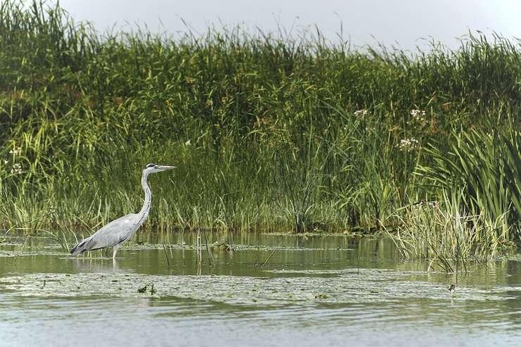Delta Dunării (Sursa foto: pixabay)