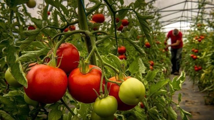 Franța- Ministrul Agriculurii caută urgent lucrători agricoli pentru a asigura productia si distributia noilor fructe si legume.