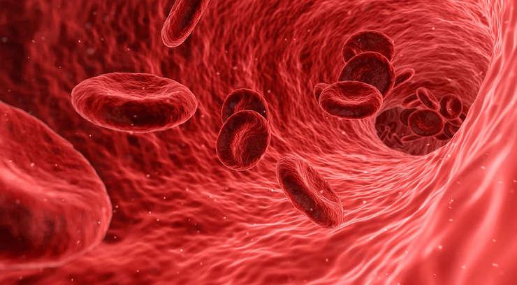 Circulatia sangelui (globule rosii) in interiorul unei vene