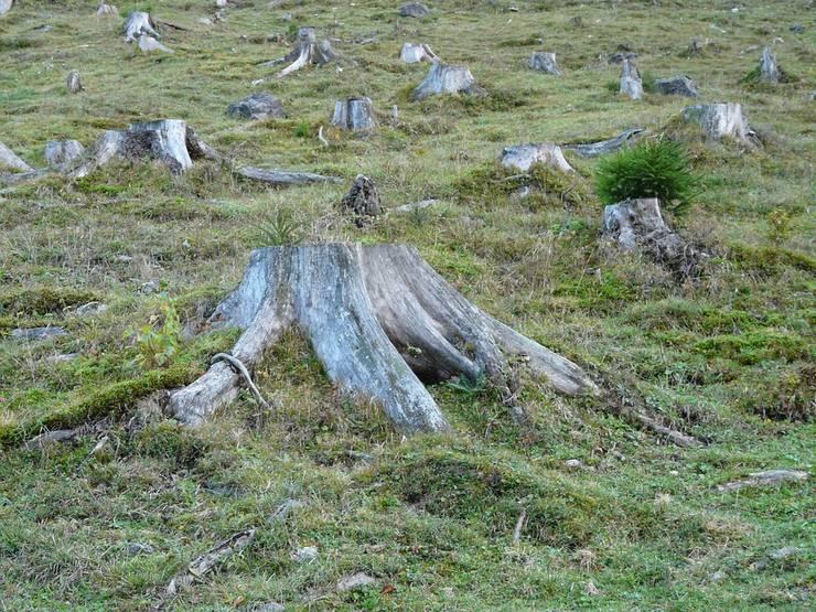 Mai puţine tăieri ilegale de copaci, în 2016 (Sursa foto: pixabay.com)