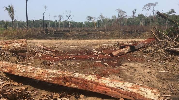 Parcelă despădurită în regiunea Amazonului, Brazilia.