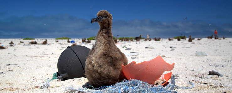 Înscrisa în Patrimoniul Mondial UNESCO, insula Henderson din Oceanul Pacific a devenit cea mai poluata din lume. 6 tone de deseuri au fost colectate în doua saptamani din iulie 2019.