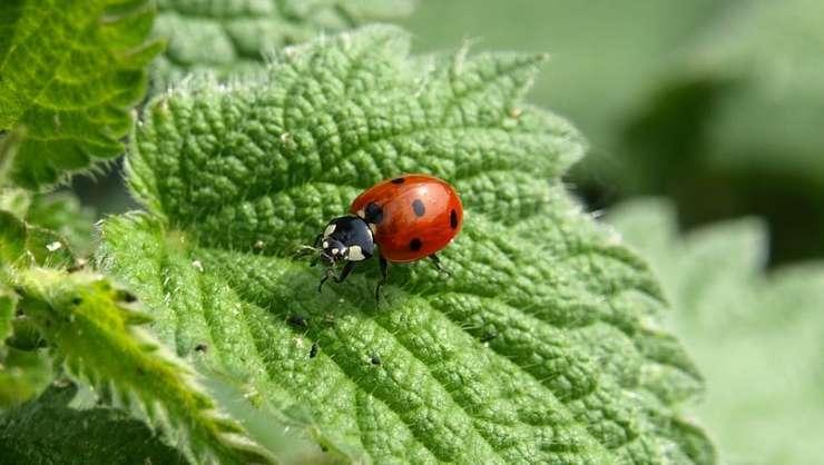 Europa a pierdut 80 la sută din rezerva ei de insecte în ultimii 30 de ani