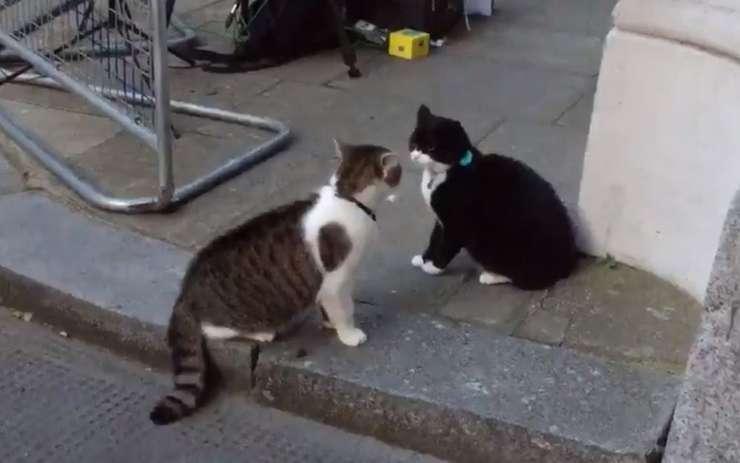 Larry și Palmerston