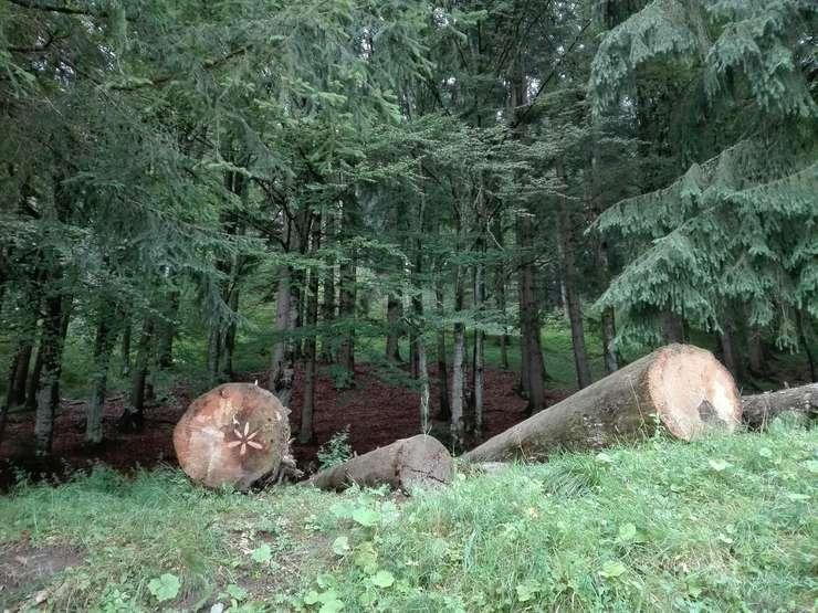 Ecologiştii critică proiectul de OUG care dă undă verde construirii de șosele prin arii naturale protejate (Foto: RFI/Cosmin Ruscior/ilustraţie)
