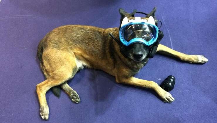 Starul acestei a 20-a editii Milipol este câinele Fusil cu masca sa conectatà